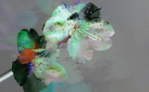 Frühlingsanfang Fotografie Copyright Claudia Hohlweg