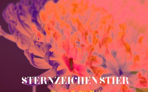 Sternzeichen Stier, Illustration und © Claudia Hohlweg für Blumoon