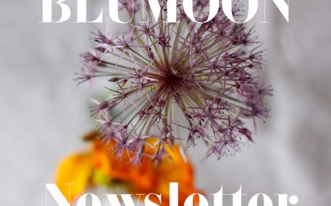 Blumoon Newsletter Fotografie Copyright Claudia Hohlweg