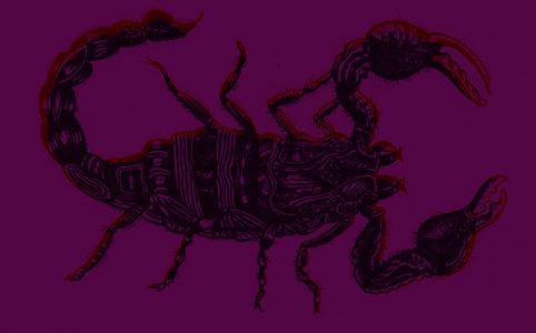 Jupiter im Skorpion, Illustration und © Claudia Hohlweg für Blumoon