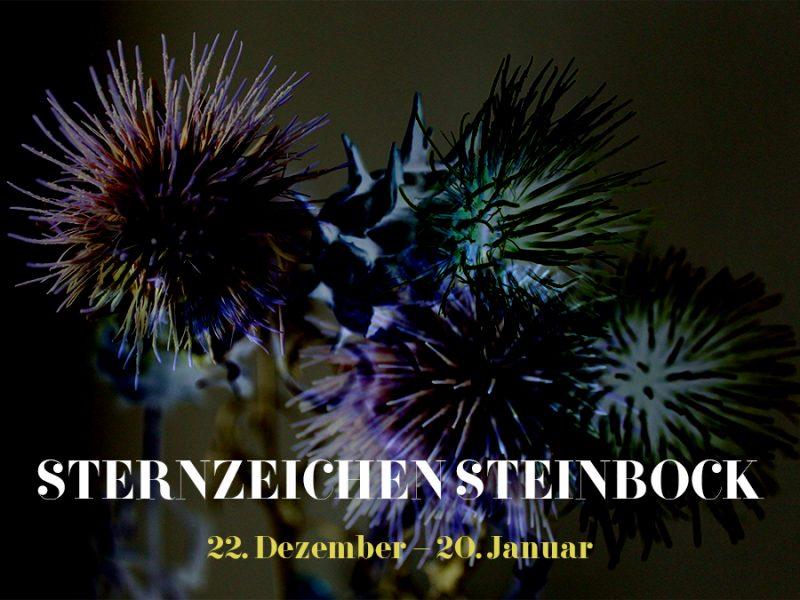 Sternzeichen Steinbock, Illustration und © Claudia Hohlweg für Blumoon
