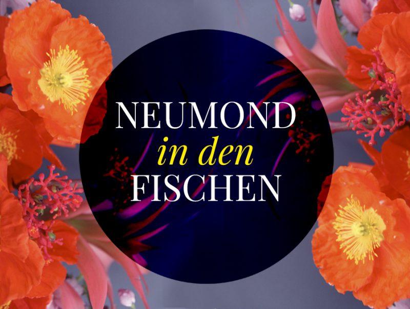 Illustration zum Neumond in den Fischen, Neumond in den Fischen, Illustration und © Claudia Hohlweg für Blumoon