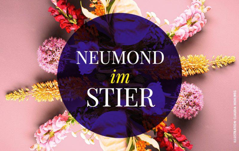 Farbige Illustration des Neumonds im Stier, Illustration und © Claudia Hohlweg für Blumoon